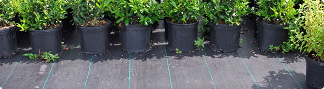 Burlap and Polypropylene Ground Cover Fabric