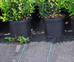 Nyp Ground Cover Weed Block