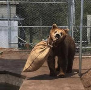 blog2-bear
