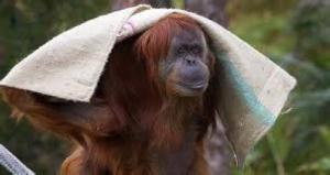 blog2-monkey