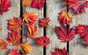 fall-burlap