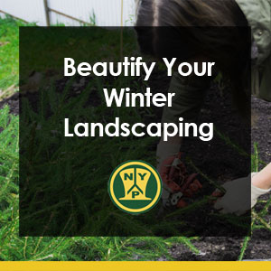 Beautify Your Winter Landscaping