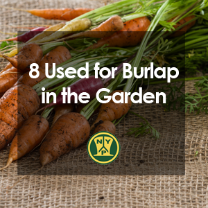 8 Uses for Burlap in the Garden