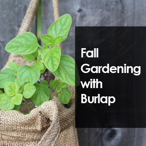 Fall Gardening with Burlap Bags