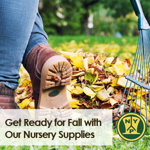Get Ready for Fall with Our Nursery Supplies
