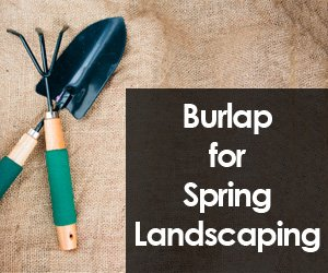 Burlap for Spring Landscaping
