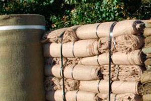 Cool Weather Plant Protection Using Burlap