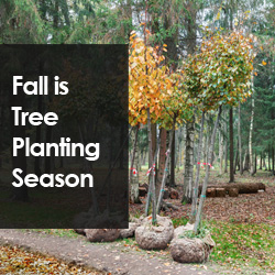 Fall Is Tree Planting Season