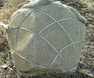 Diamond Wire Basket vs Traditional Tree Baskets